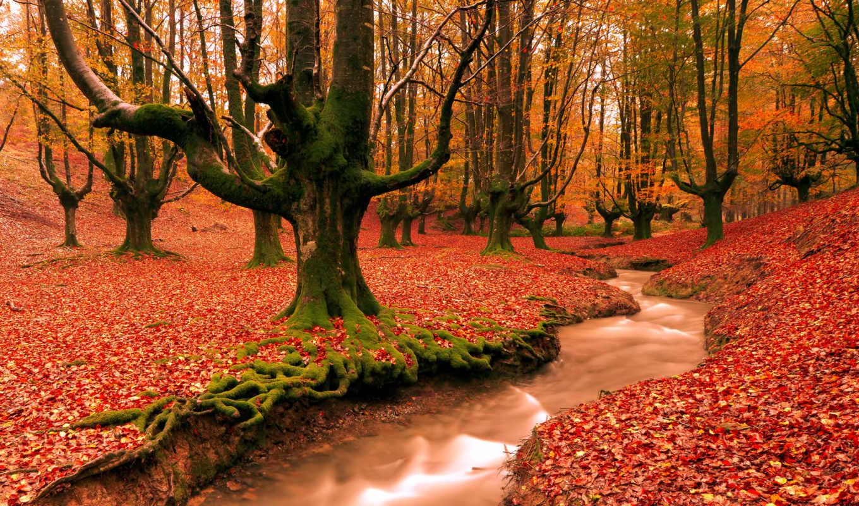 лес, осень, дорога, деревья, германия, траве, зеленой, баварии, осенняя,