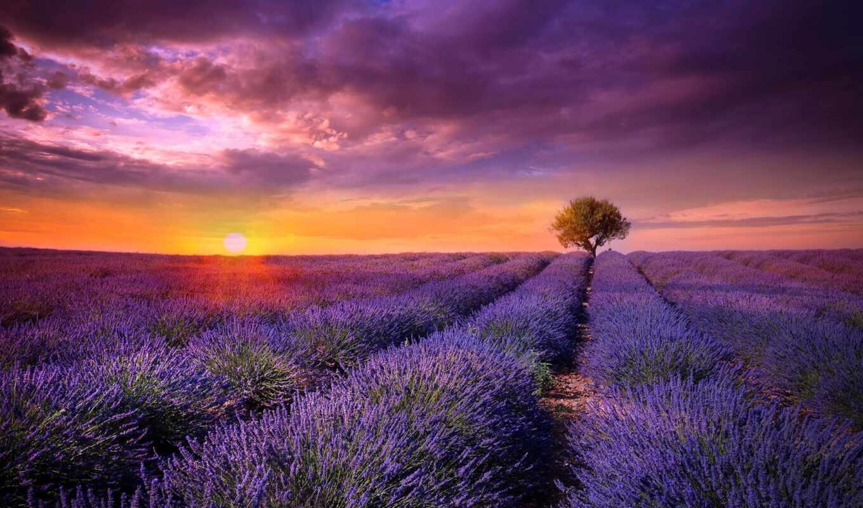 lavender, цветы, природа, поле, закат, пейзажи -,
