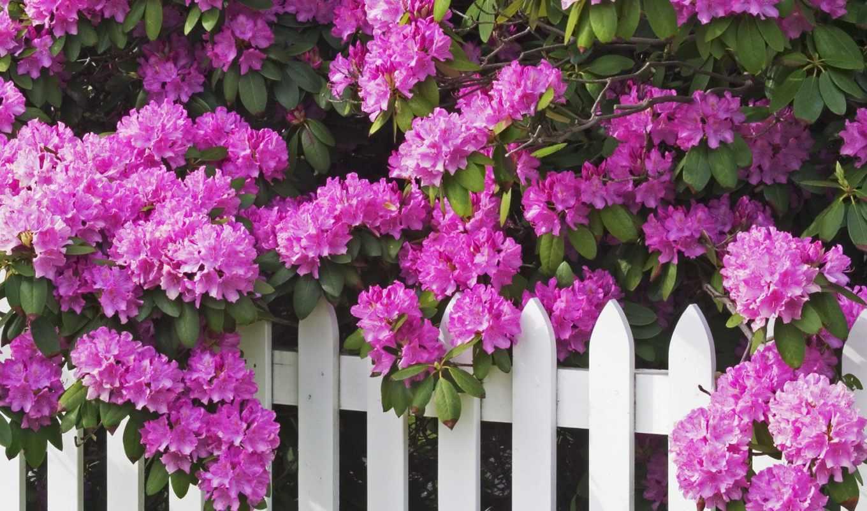 cvety, красивые, очен, цветов, рубрики,