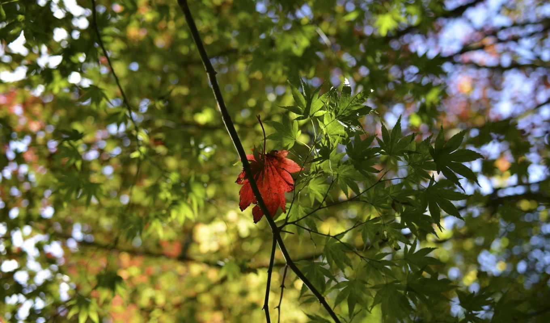 plants, зелёный, free, природа,