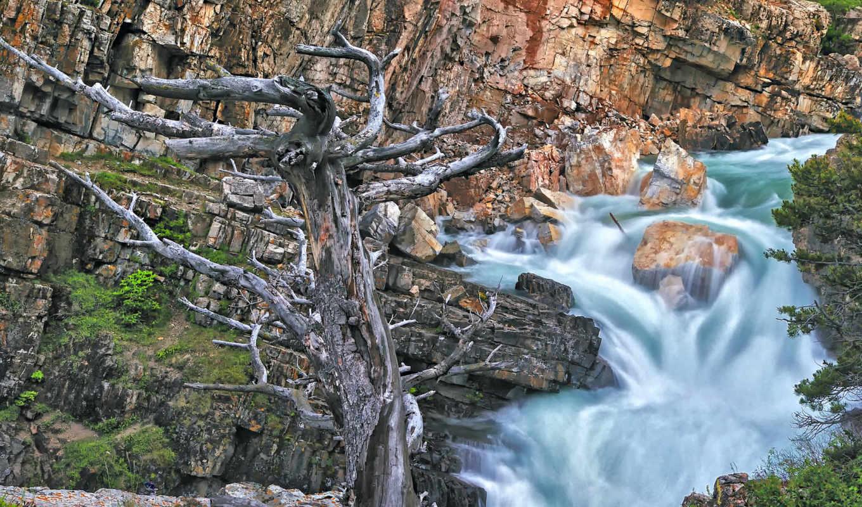 река, дерево, resim, şelale, kayaları,