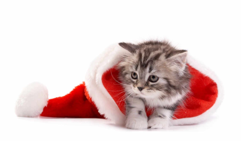 новогодние, котенок, shine, картинка, обогреватель, стена, каталог, шапке, кот, доставка,