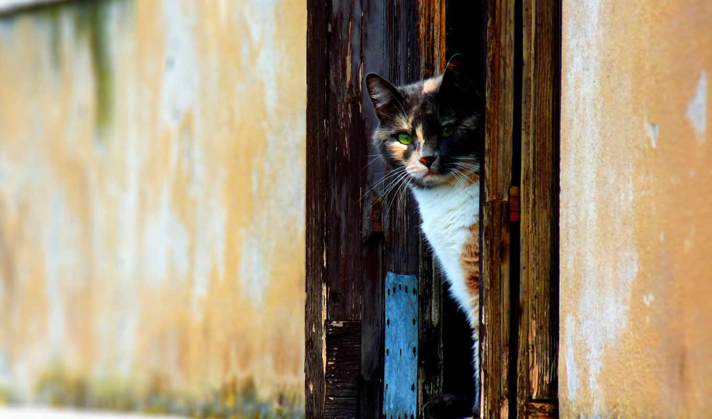 кот, кошки, окно, дверных, если, кошек,