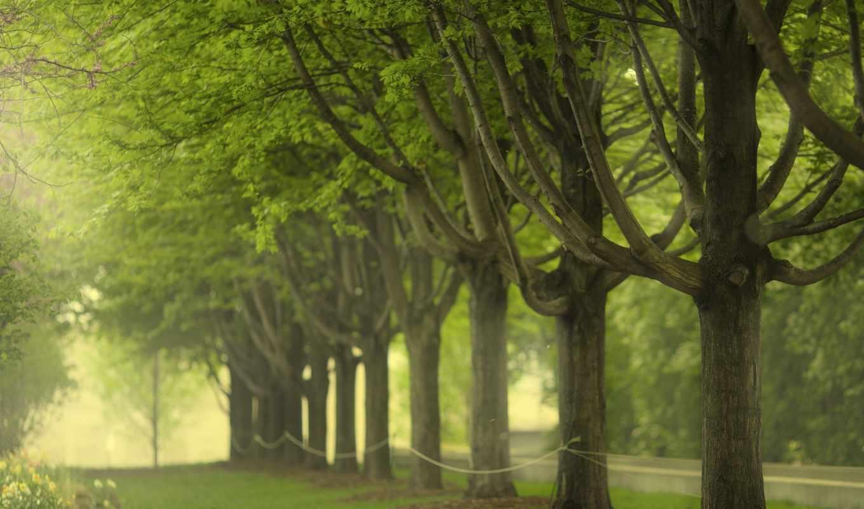 ťяằţξłł, chicago, park, деревя, tweets, millenium, трава, latest,