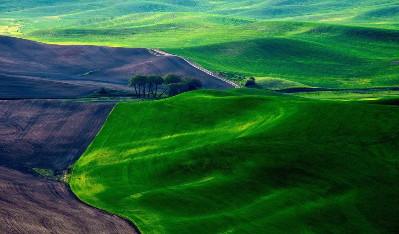 поля, зеленые, панорама, ковры, луга, поле,