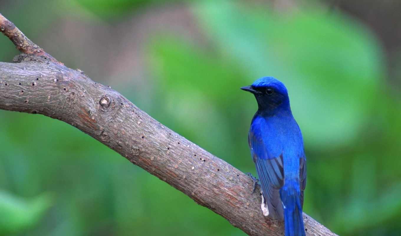 птица, синяя, smartphone, картинок, птицы, красивые, сайте, смотреть, birds, птичка, стих,