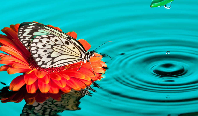 бабочка, цветы, images, desktop, free,