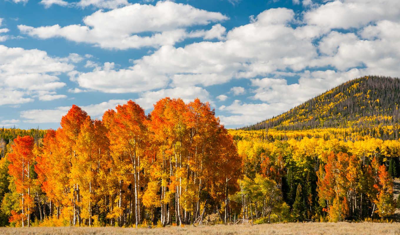 осень, листья, деревья, желтые, лес, природа,