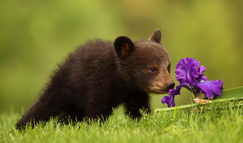 красивые, zhivotnye, животных, февр, ждут, фотографий, тоже, eti, такие, devushki, момента,