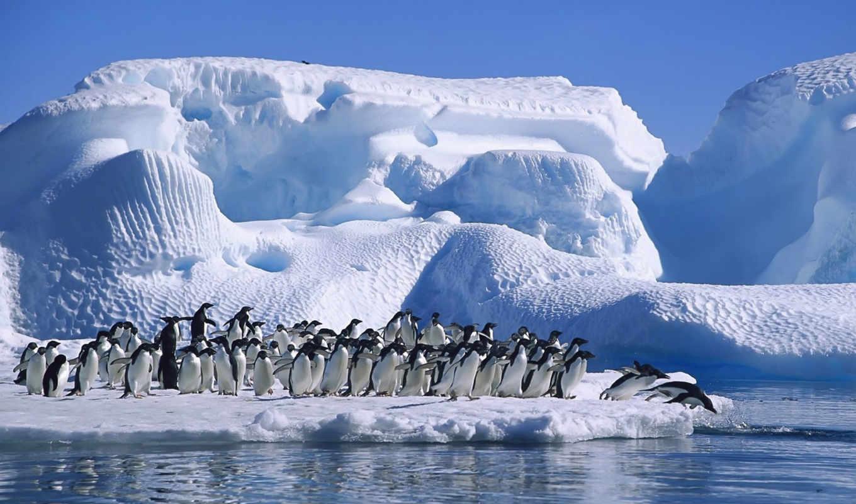 iceberg, айсберги, пингвины, айсбергов, красавица, ледяная, антарктида, изображение, клип, пингвинов,