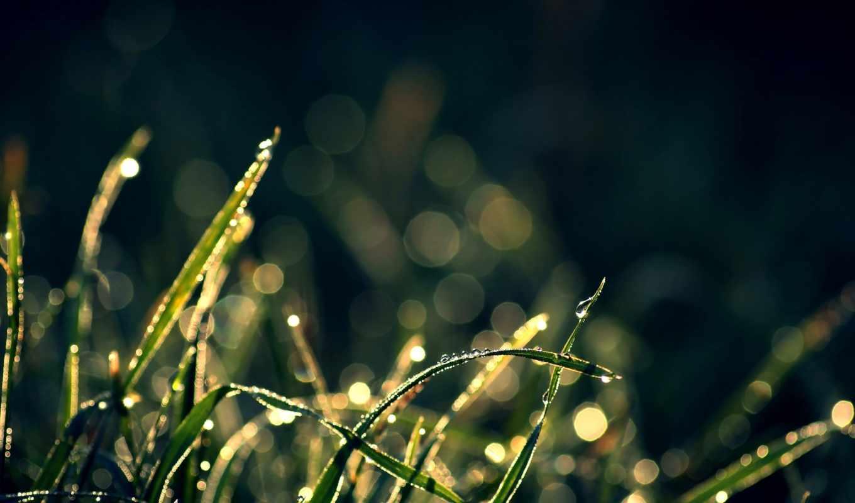 трава, блики, капли, растения, макро, sunlight,