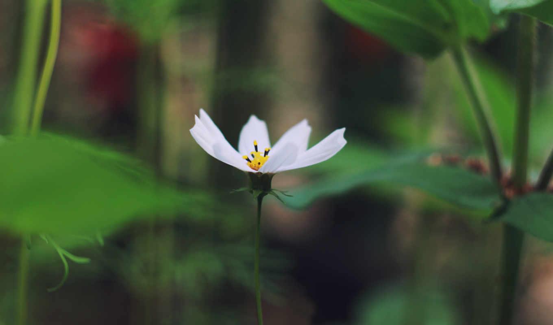 цветы, макро, высоком, качестве,