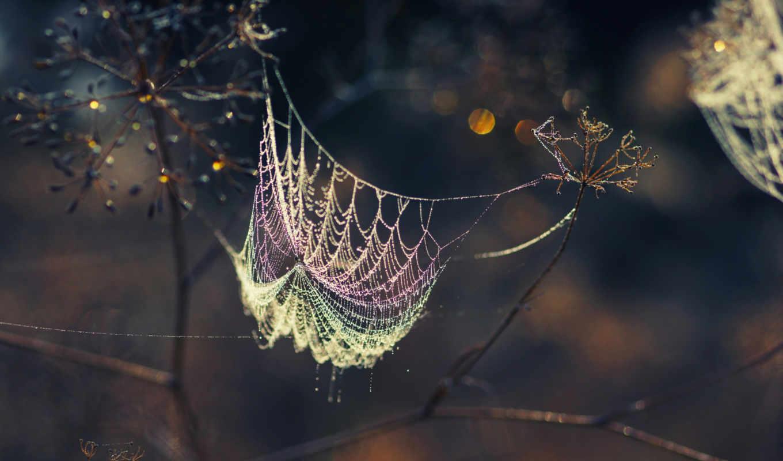 web, роса, капли,