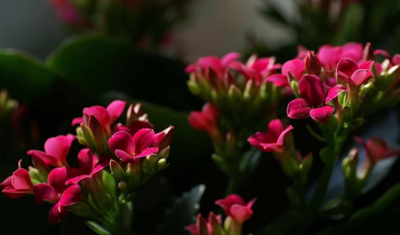 flowers, цветы, garden,макро,, цвета, красные цветы,,