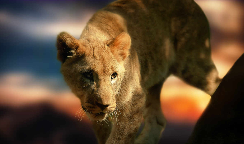 animals, lion, free, birds, images, this,