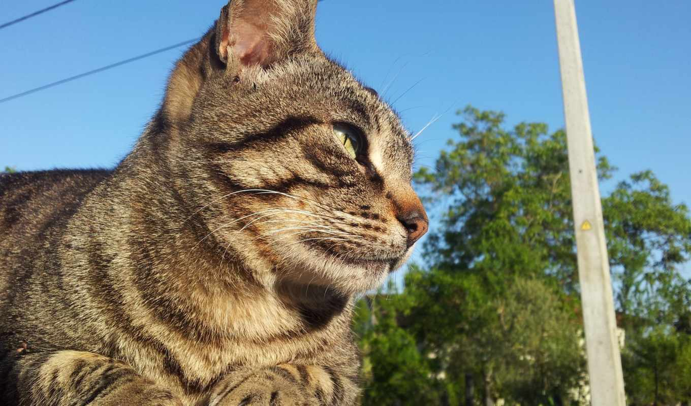 cats, tabby, you,