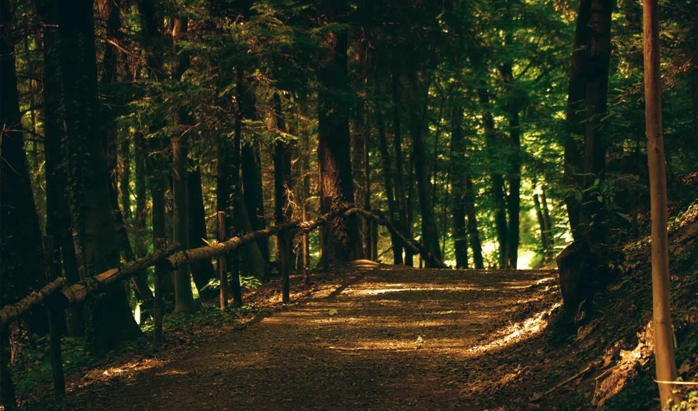 лес, деревья, флот, тропинка, природа, дорога, лесу,