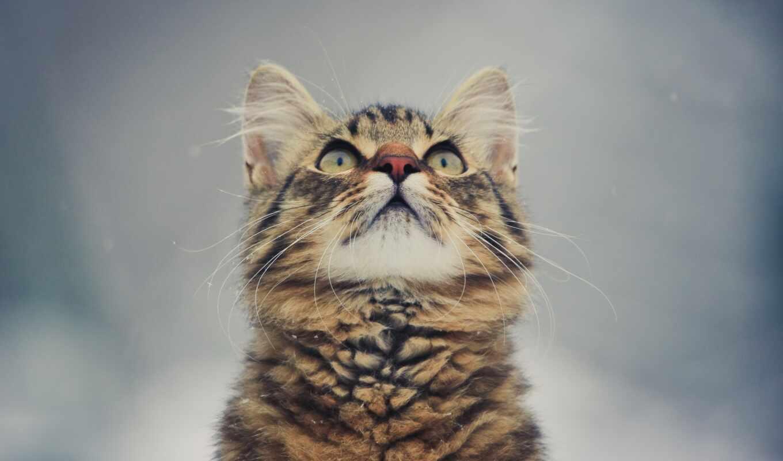 котенок, взгляд, морда, кот, animal, паула