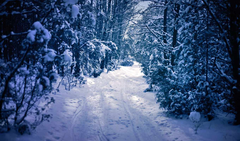 manzarası, kış, karlı, orman,