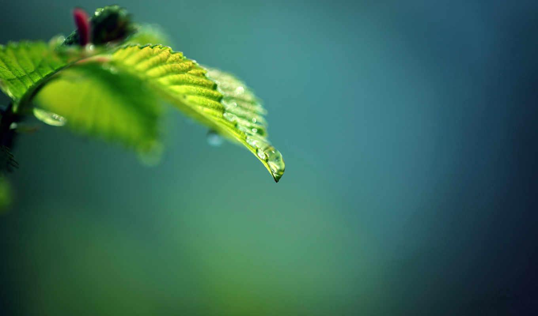green, leaf, drop,