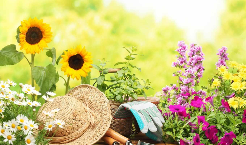 cvety, лейка, цветов, горшок, садовые, фотоклипарт, перчатки, первые, садом, ухода,
