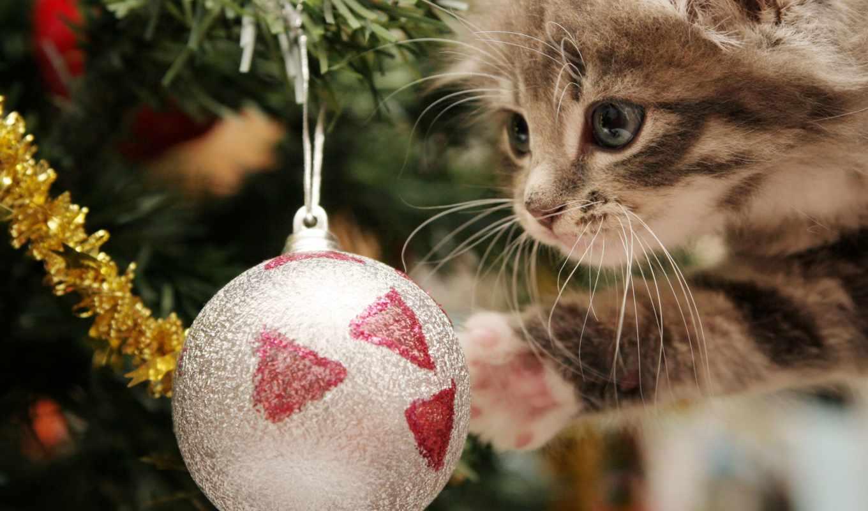 игрушки, new, год, котенок, елки, самая, дек, кот, большая,
