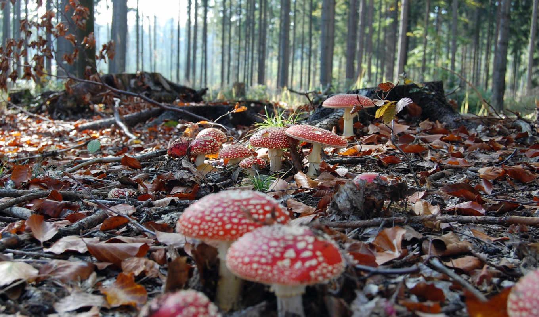 cogumelos, pinterest, florestas, see, об, more, fungos, mais, flora,