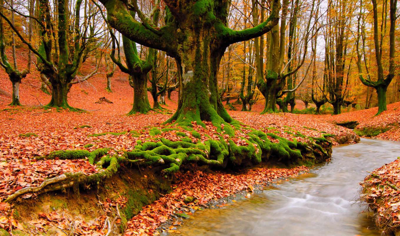 природа, осень, лес, листва,