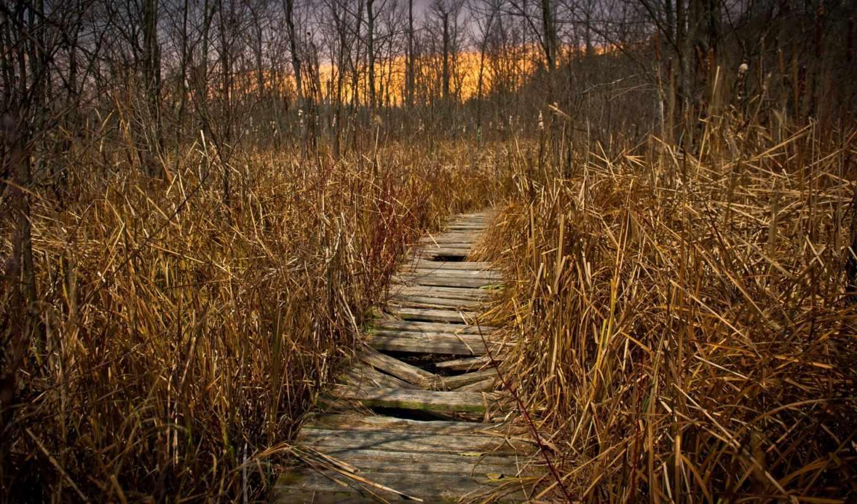 трава, dry, путь, между, осень, коллекция,