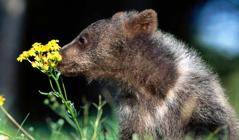 zhivotnye, цветы, медвежонок, медведи,