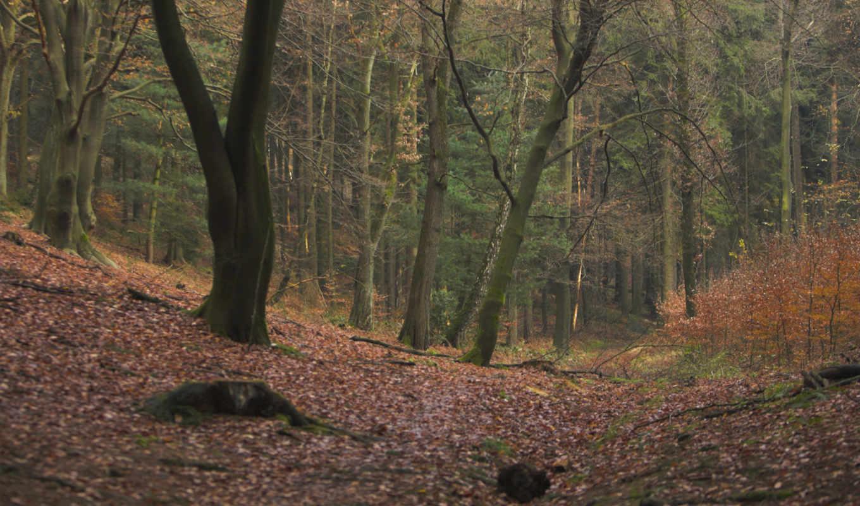 лес, листва, деревья, осень, природа, wallpapers,