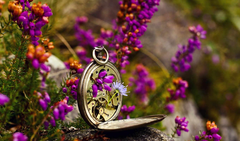 макро, часы, цветы, праздники,