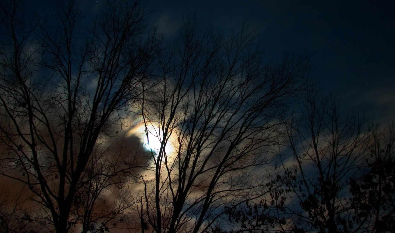 луна, деревья, лес, ночной, nature, landscapes,