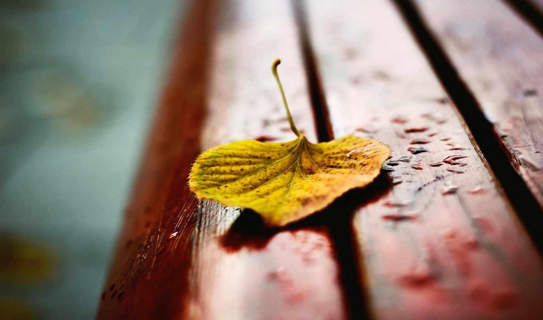 лист, лавочка, желтый, лавка, осень, картинка, картинку,