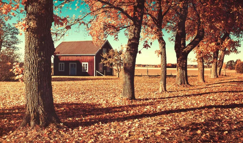 осень, house, листья, деревья, мотив,
