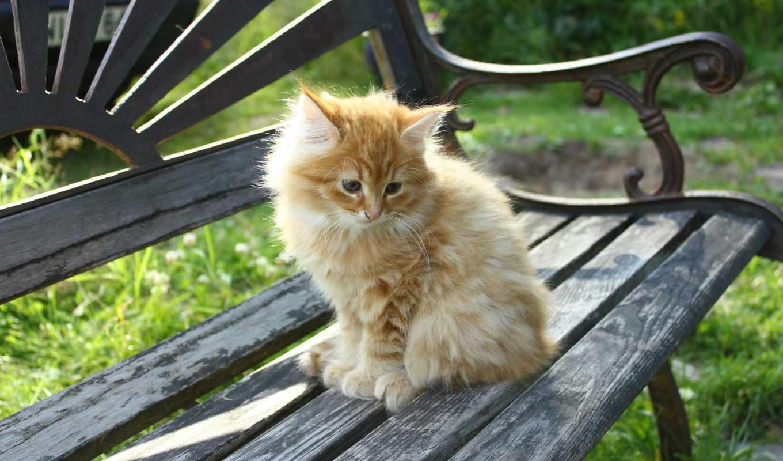 милые, коллекция, кошки,