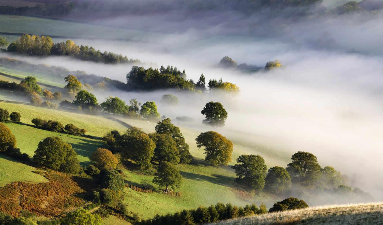 mist, деревя, коллекция, картинок, густой,