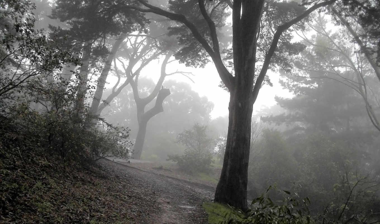 туман, лес, мрачные, деревя, лесу, спуск, mysterious, склон,