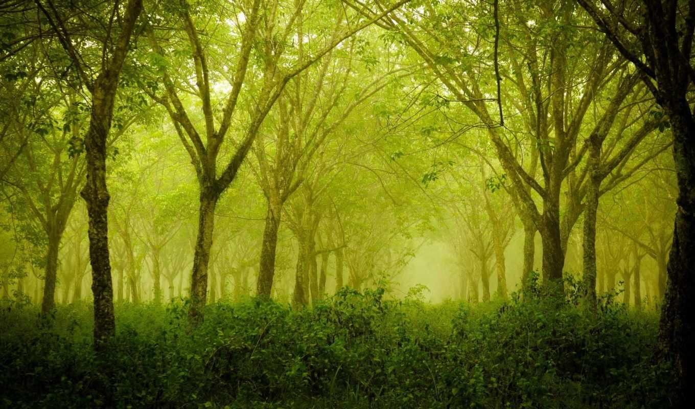 природа, summer, лес, trees,