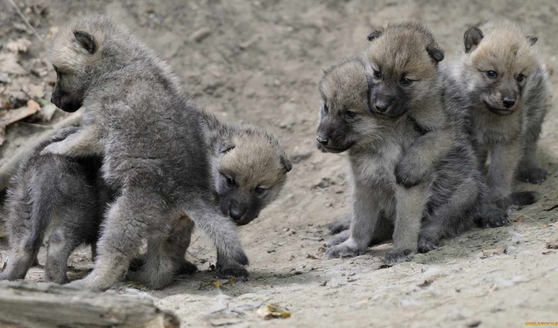 волчата, you, волчат, card, волк, меня, волка, режешь, спросил,