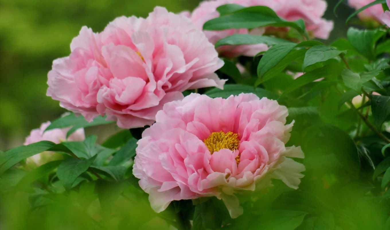 цветов, красота,