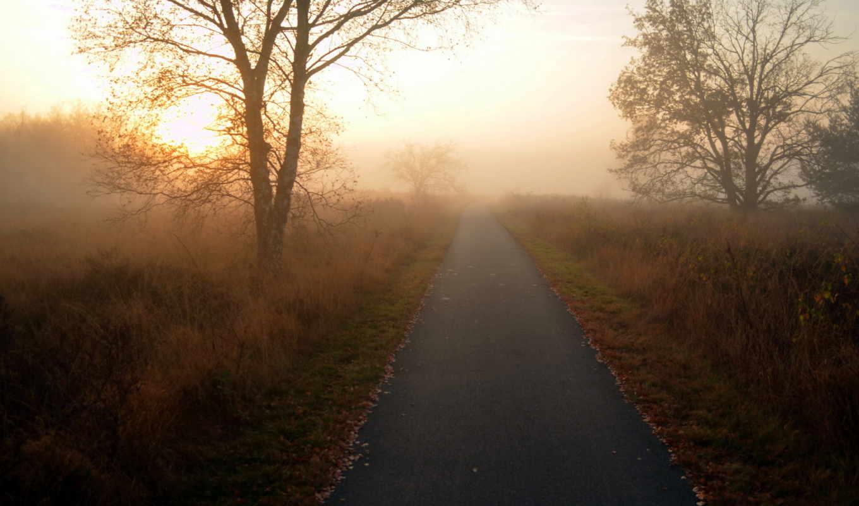 дорога, пейзаж, утро, природа, деревья, картинка,