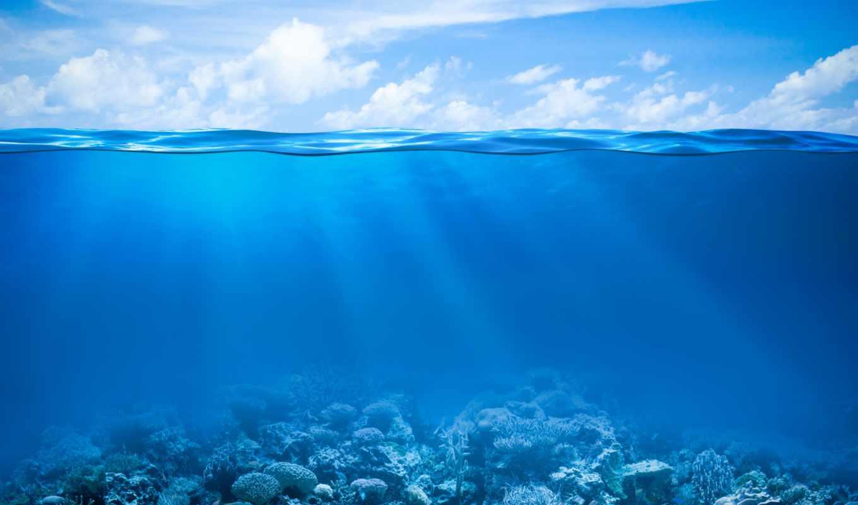 морского, аквариума, bottom, днк, клипарт, вид, рифы, поверхности, коралловые, подводные, морское, морских, растровый, водой, горизонта, воды,