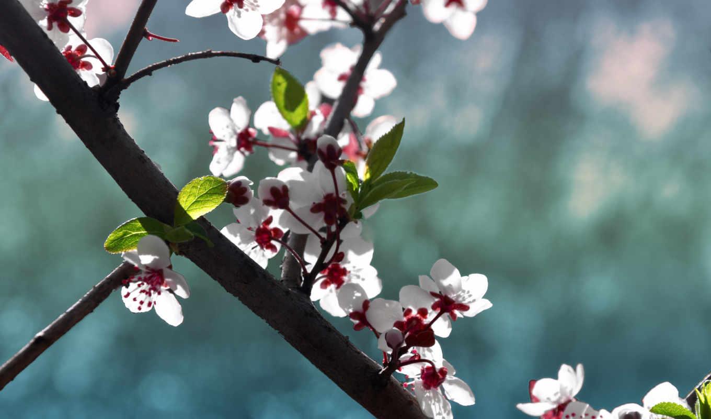 , цветы, минимализм, весна, ветка,