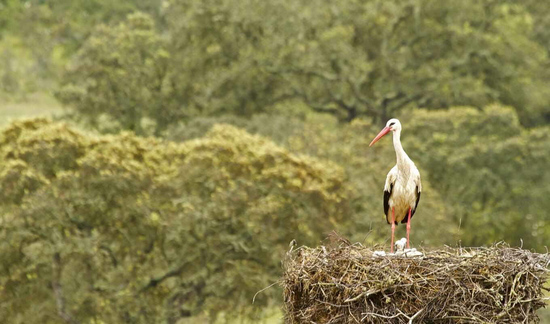 nest, stork, птица, планшетный, цыпочка, foggy, pro, smartphone