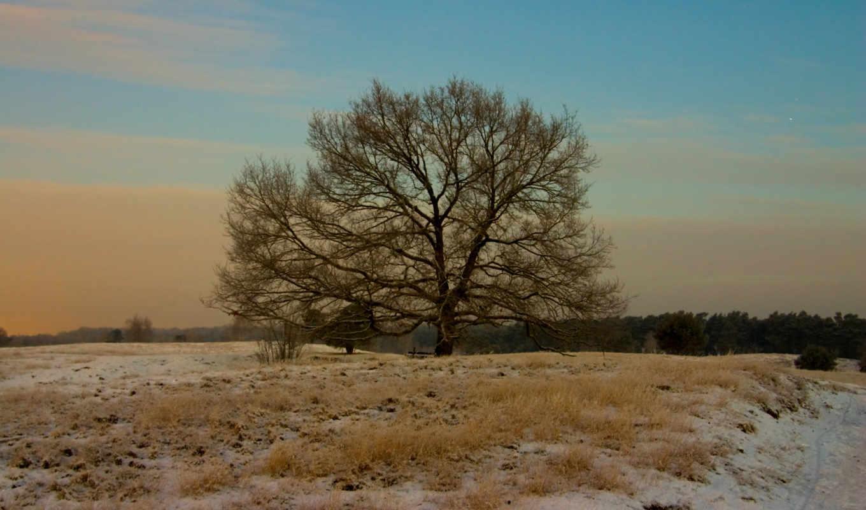 nature, winter, landscapes, качестве, фотографиях, просмотров, изысканная,