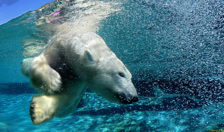 медведь, белый, водой, под, арктика,