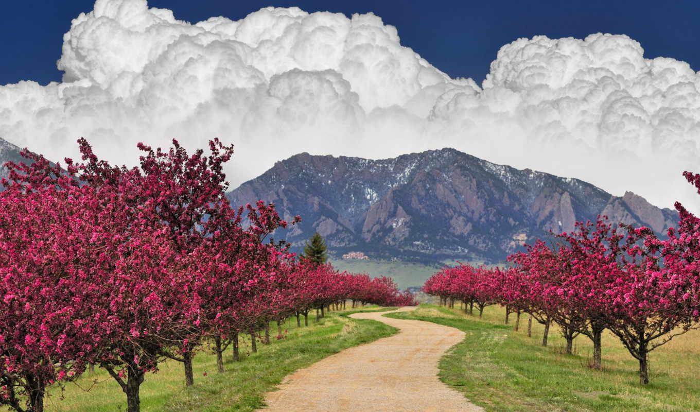 деревья, весна, цветущие, весной, коллекция, горы,