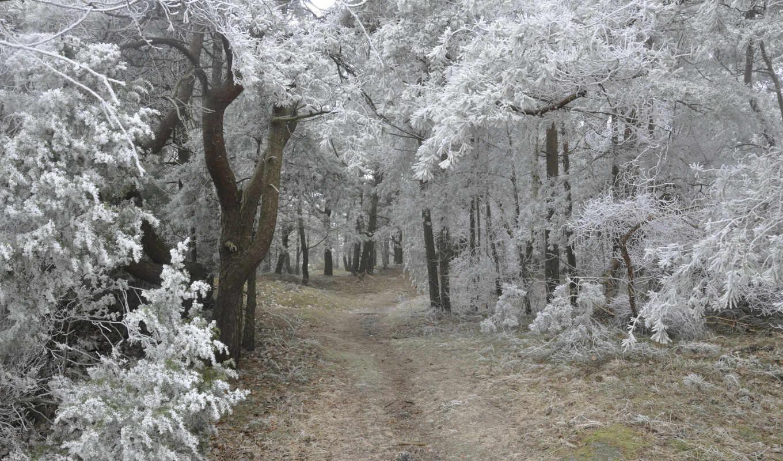 зимние, дни, красивые, марта, последние,