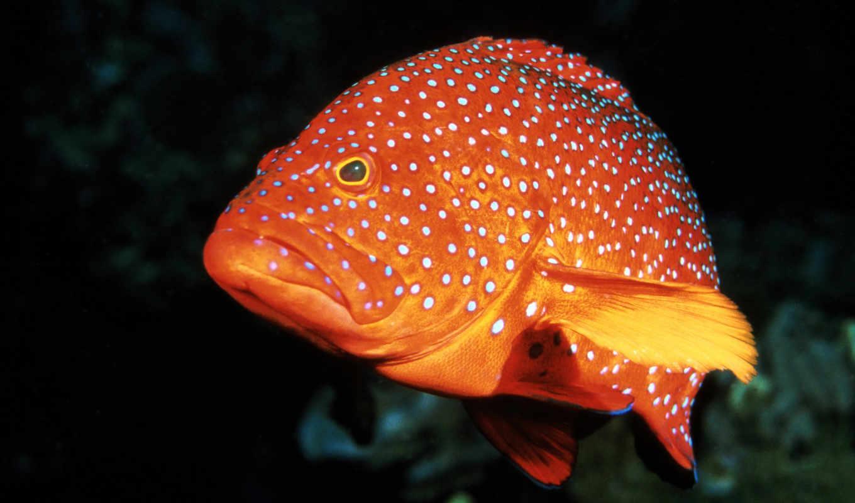 fish, pisces, леопард, очень, морских, серьезная,